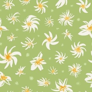Star Blossom in Sage