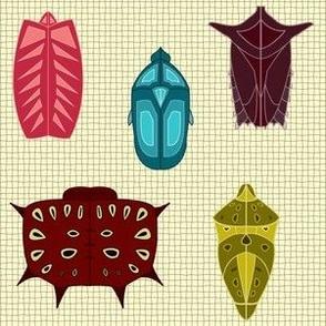 Colorful Shield Bug Exoskeletons