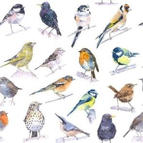New Garden Birds