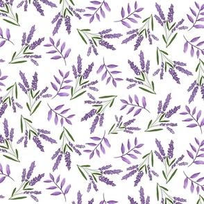 Lavender Road lavender