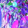 Dream_faces_in_the_rose_crystal_forest