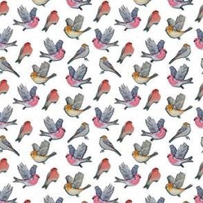 birds in pink and yellow // watercolor Pine Grosbeak birds