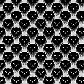 Black cats, 35'', S