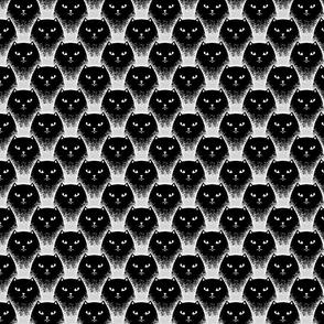 Black cats, 2.62'', XS