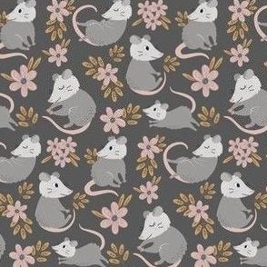 possum grey