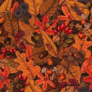 Autumn treasures 1