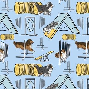Simple Rough Collie agility dogs - blue