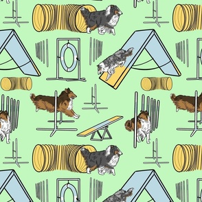 Simple Rough Collie agility dogs - green