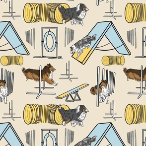Simple Rough Collie agility dogs - tan