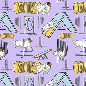 Simple color head white Rough Collie agility dogs - purple