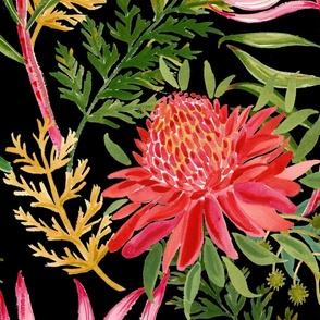 Painted Protea black large