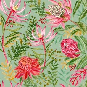 Painted Protea sage