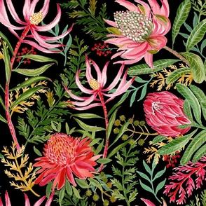 Painted Protea black