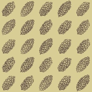 spruce cones in rows - brown on golden tan