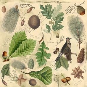 Autumn explorers botanicals
