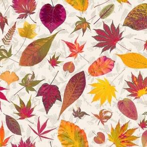 Autumn Leaf Botanical Collection