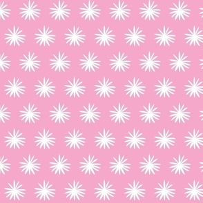 White Daisy on Pink