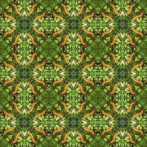 Nahuku Ferns