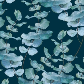 Silver gum eucalyptus BLUE SKY