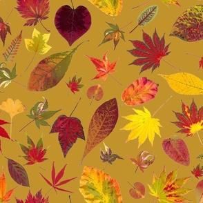 fall leaves on mustard