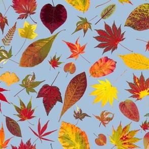 fall botanical sky blue  bkgd
