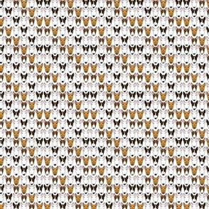 Adorabullterriers