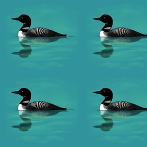 loon and reflection for projects