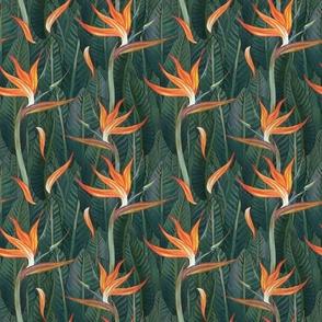Bird of Paradise STRELITZIA by Leanne Nowell