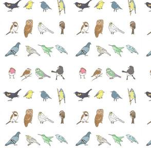 birdies sketch