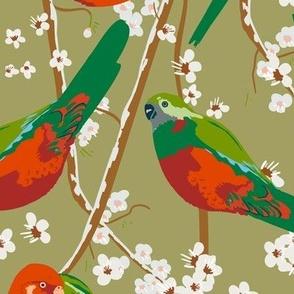 King Parrots in Blossom / Avocado