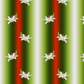 White Lilies Gradient Stripe