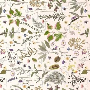herb tea towel ombre blush