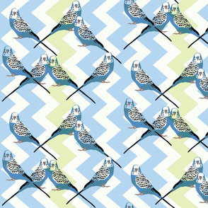 Parakeets Looking at You - Blue - Blue-Green Chevron Background