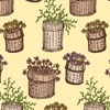 Pretty_planters_-_iced_apricot