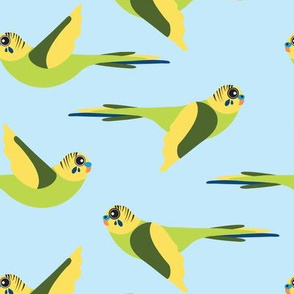 Fly Budgie!