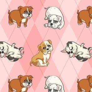 English Bulldogs (Pink)