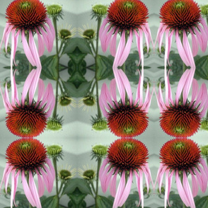 Muted Cone Flower