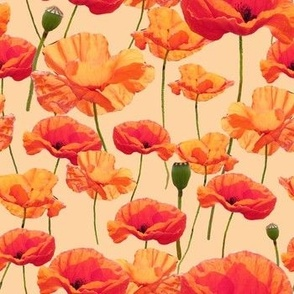 Wizard of Oz - Orange Poppies