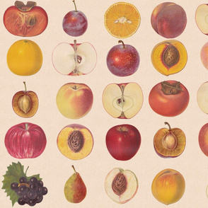 Vintage Fruit Assortment