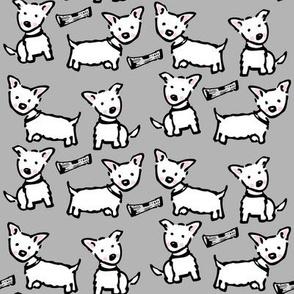 west highland white terrier: westie grey