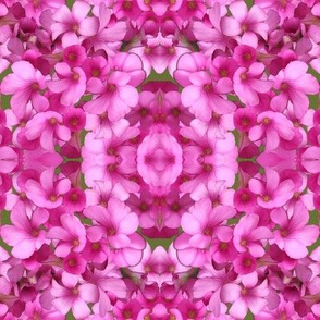 Pink Wood Sorrel - mirrored