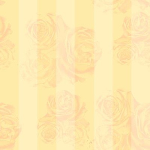 RosyStripes-Golden