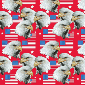 Eagles in Red White and Blue