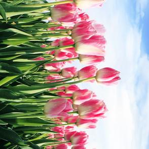 Pink Tulip Border Print fabric Blue Cloudy sky