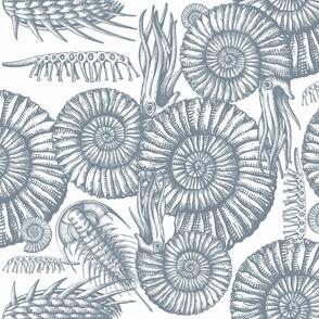 ammonite white and gray