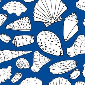 scattered shells