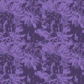 basic tone-on-tone_purple_asters_9_24_07_005-ch-ed