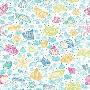 seashells, starfish and algae