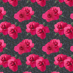 Pink Roses on Castle Stonework