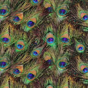 Peacock Feathers Invasion - Fans